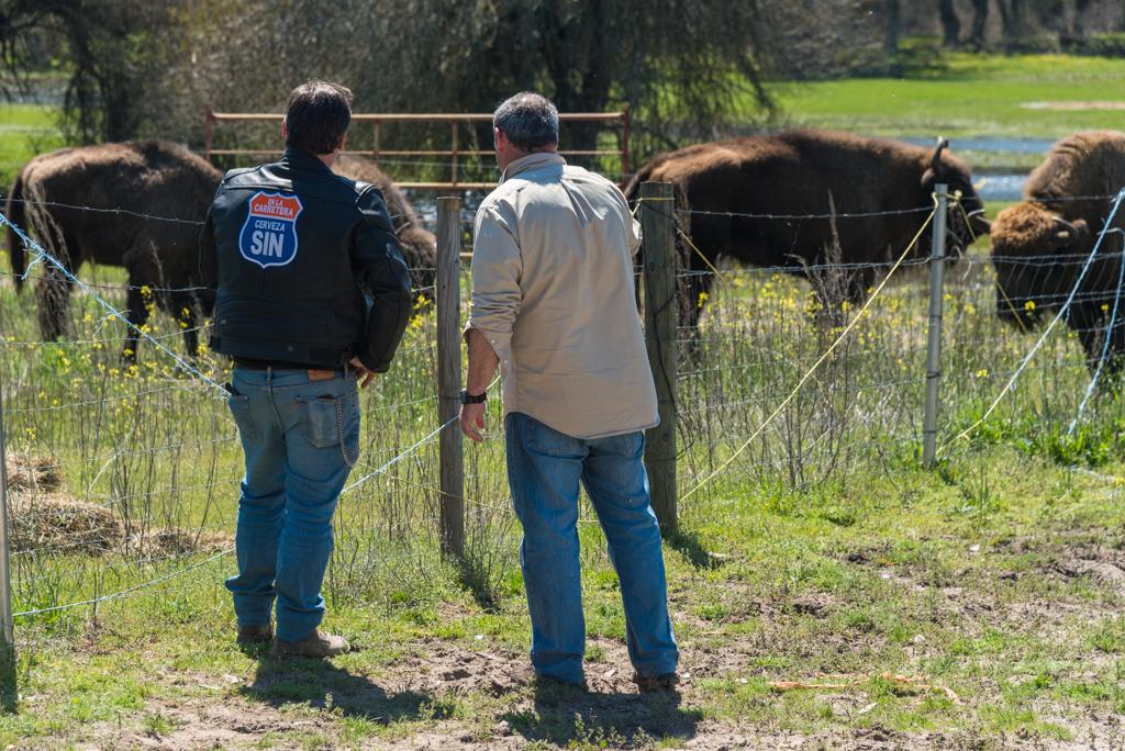 suelta-bisontes-4148